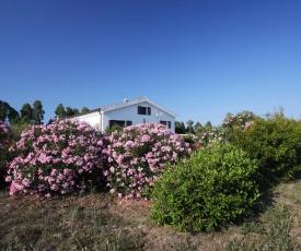 Casa Gollei